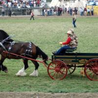 The Babbitt Bros. wagon at a Pendleton Round Up.